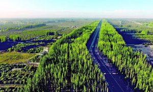 柯柯牙绿化基地的图片